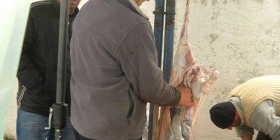 Vier Pfoten dezvaluie practicile ilegale privind sacrificarea mieilor de Paste: