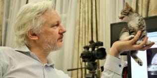 Publicul larg, invitat sa ofere sugestii pentru numele pisicii primite cadou de Julian Assange