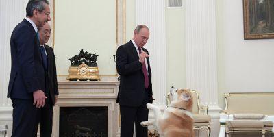 FOTO Putin isi pregateste vizita in Japonia scotand coltii lui Iume la inaintare: ce mesaj i-a transmis premierului Shinzo Abe