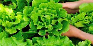 Ciorba de salata ca la Maramures. Ingredientul secret care face diferenta